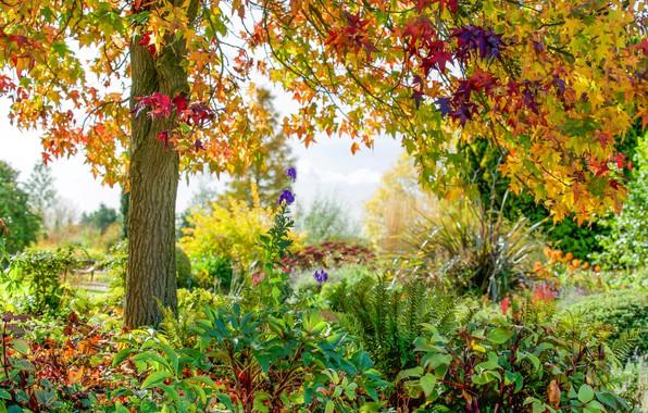 Picture autumn, flowers, Park, tree, England, England, Essex, Essex, RHS Garden Hyde Hall, Rettendon, Rettendon