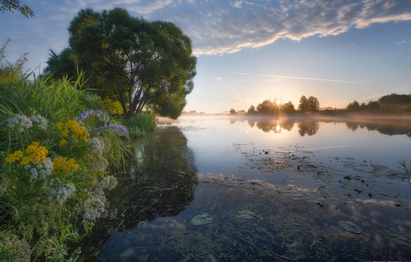 Picture the sky, grass, water, flowers, river, tree