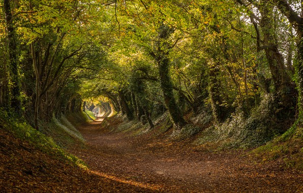 Picture road, autumn, trees, England, the tunnel, the tunnel, England, West Sussex, West Sussex, Halnaker, Roman …