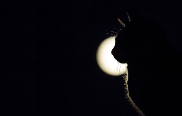 Picture cat, light, shadow