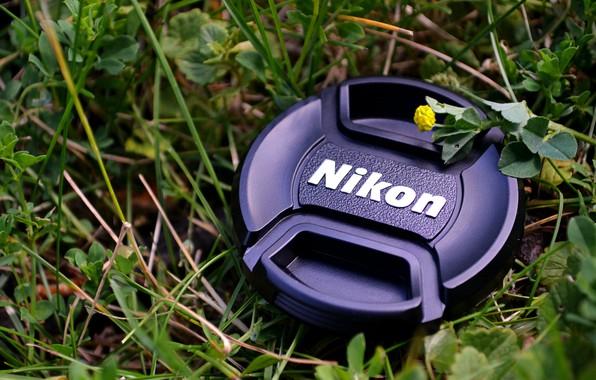 Picture Nikon, Grass, Macro