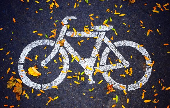 Picture autumn, asphalt, hdr, the sidewalk, bike path, drawing on asphalt, velospeed, the leaves on the …