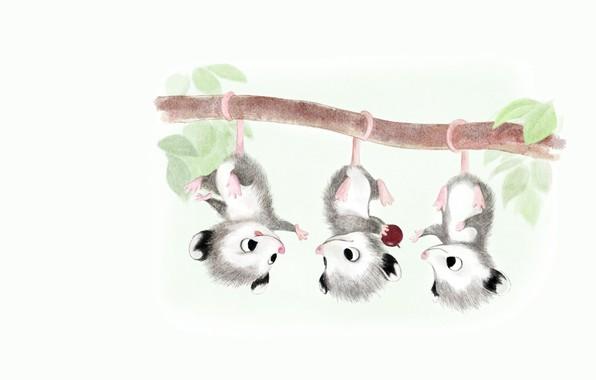 Picture the game, branch, art, kids, possum, children's, fun, family, berry, Sydney Hanson