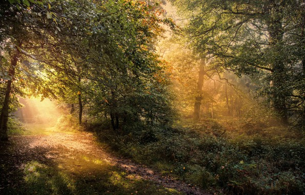 Picture autumn, forest, trees, dawn, England, trail, morning