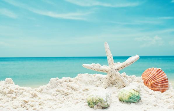 Picture sand, sea, beach, star, shell, summer, beach, sea, blue, sand, starfish, seashells