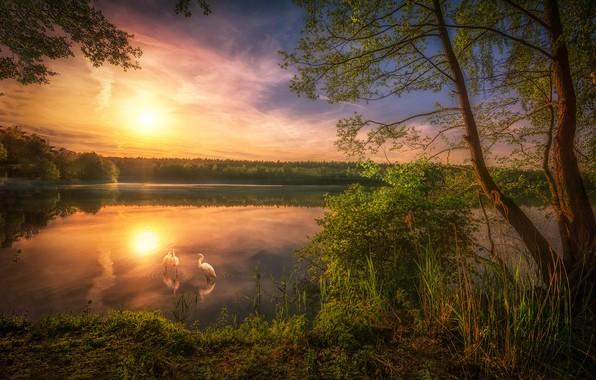 Picture lake, dawn, morning, herons