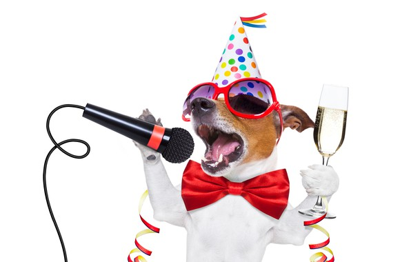 Wallpaper dog, New Year, glasses, new year, champagne, happy, Happy ...