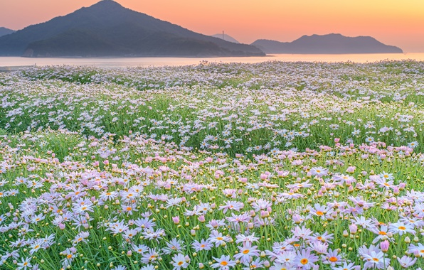 Photo wallpaper nature, mountains, field, flowers