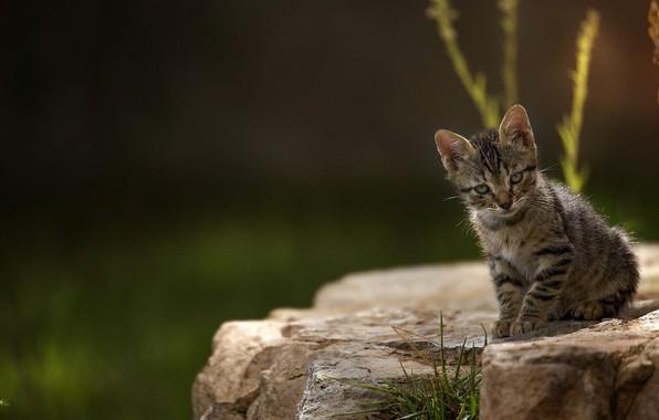 Picture blur, sitting on a rock, tabby kitten