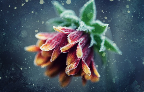 Picture frost, flower, patterns, frost, bokeh