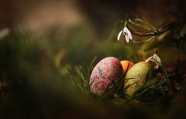 Picture grass, macro, flowers, nature, holiday, eggs, spring, Easter, primroses