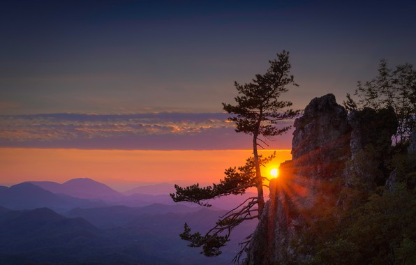Wallpaper the sky, sunset, mountains, rock, tree, pine