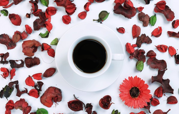 Picture flowers, coffee, petals, Cup, flowers, cup, coffee, petals, frame, floral