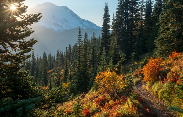 Picture forest, the sky, grass, the sun, trees, mountains, trail, slope, USA, the bushes, Mount Rainier ...