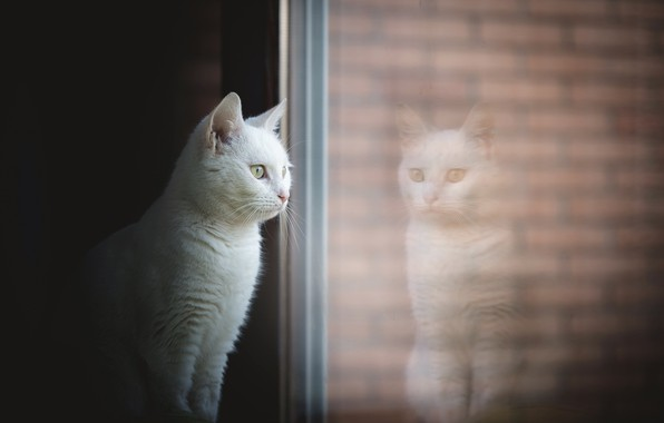 Picture cat, house, window