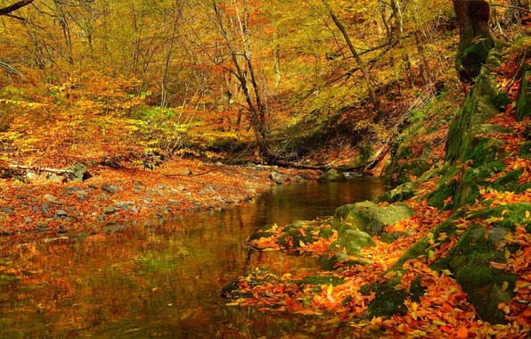 Picture Stream, Autumn, Forest, Stream, Fall, Foliage, Autumn, Colors, Forest, Falling leaves, Leaves, Flow, Stream