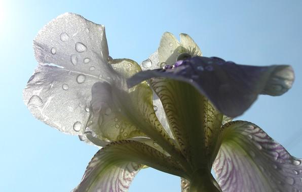 Picture summer, the sun, rain, flower macro
