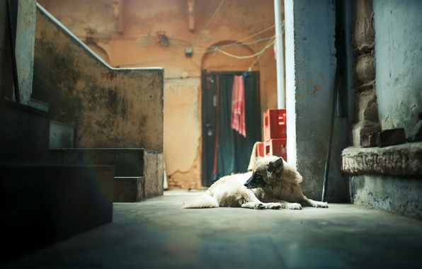 Picture house, room, dog