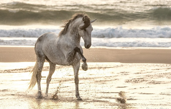 Picture pose, grey, horse, horse, grace