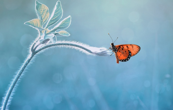 Picture macro, background, butterfly, rostenie