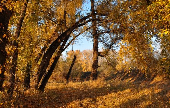Picture Autumn, Trees, Fall, Foliage, Autumn, Colors, Trees, Leaves