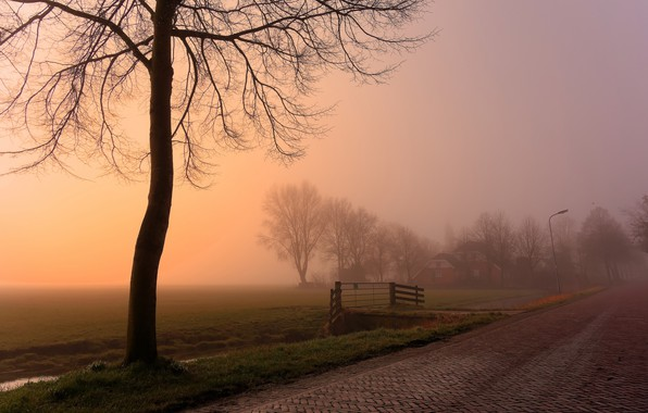 Picture road, fog, tree, morning