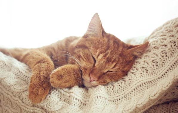 Picture cat, cat, paws, red, muzzle, sleeping, resting