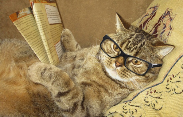 Picture cat, creative, humor, glasses, lies, pillow, journal, reads, smart