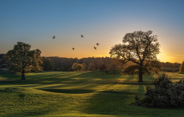 Picture trees, birds, meadow