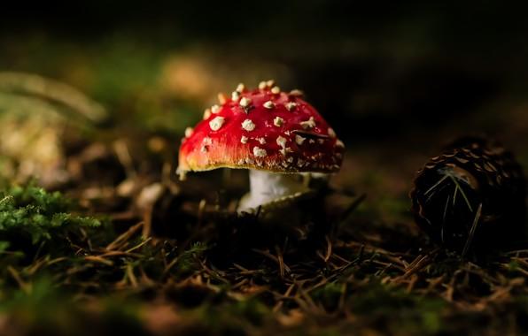 Picture autumn, nature, mushroom
