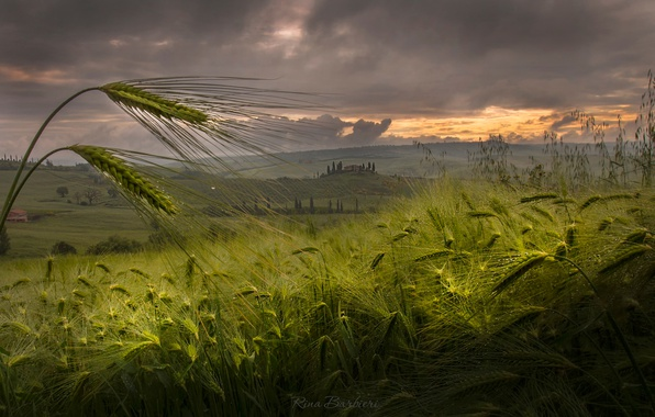 Picture field, summer, the sky, light, nature, the evening, spikelets