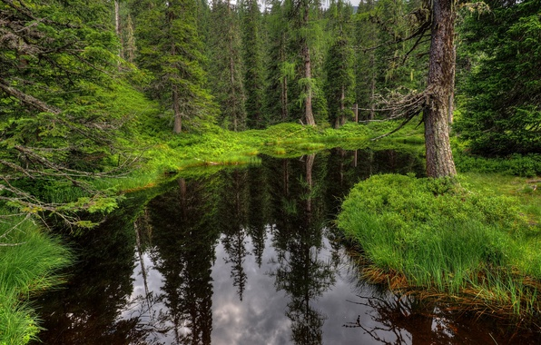 Picture Greens, Water, Forest, Green, Forest, Dark waters