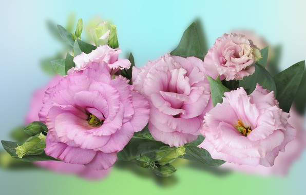 Picture Flowers, Colored, Background