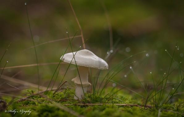 Picture grass, drops, macro, mushroom, moss