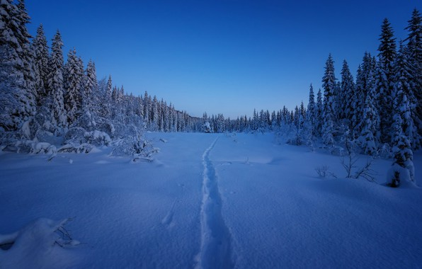Picture winter, forest, snow, ate, Norway, path