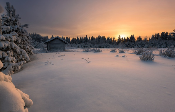 Picture winter, forest, snow, sunset, Finland, Finland