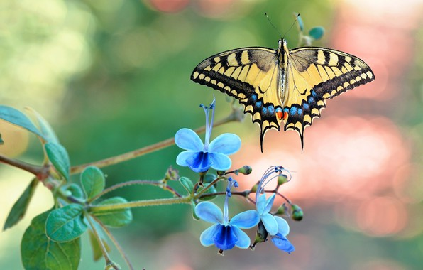 Picture butterfly, flowers, nymphalid