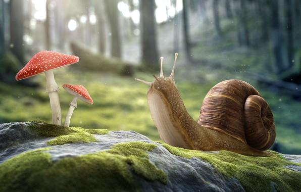 Picture mushrooms, snail, Amanita