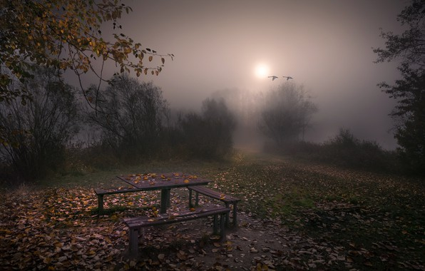 Picture autumn, fog, the evening, bench