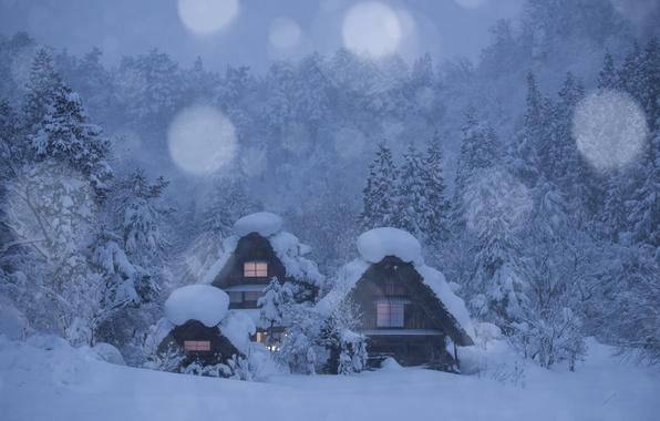 Picture winter, forest, snow, trees, Japan, village, houses, Japan, Shirakawa, Shirakawa-go