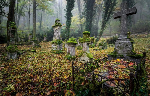 Picture leaves, graves, cemetery