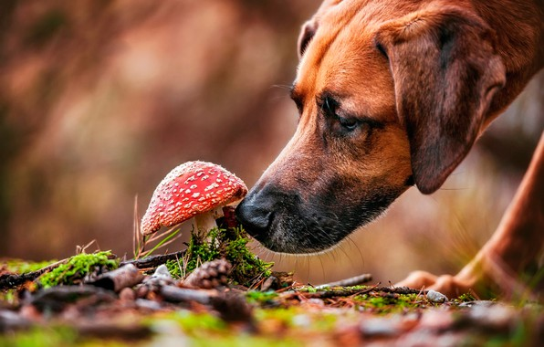 Picture face, nature, mushroom, moss, dog, mushroom, bokeh