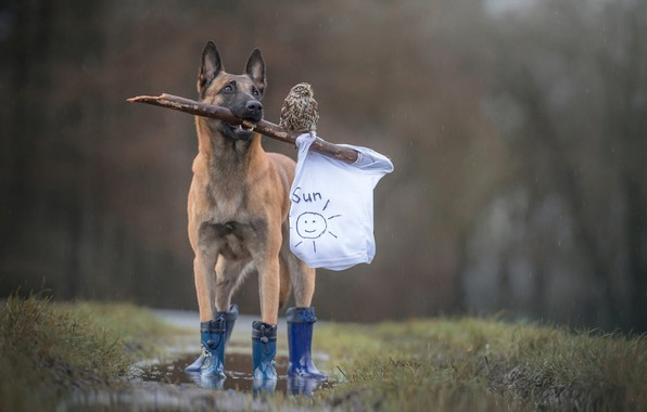 Picture forest, animals, white, grass, rain, owl, bird, figure, dog, boots, Mike, puddle, flag, friendship, friends, …