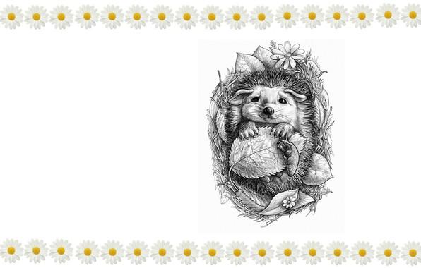 Picture figure, art, hedgehog, children's