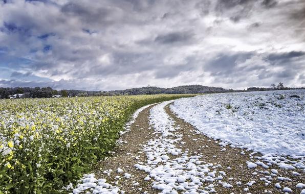 Picture field, snow, rape