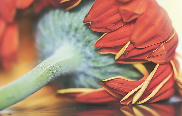 Picture flower, macro, background