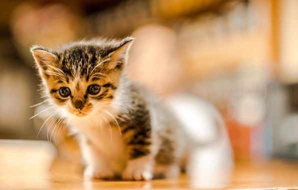 Picture baby, kitty, bokeh