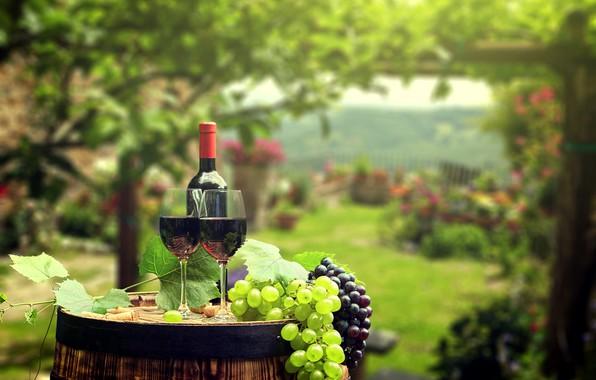 Picture greens, leaves, background, wine, bottle, garden, glasses, grapes, tube, barrel, bokeh