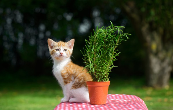 Picture flower, table, kitty, bokeh