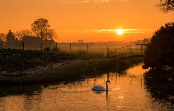 Picture the sky, grass, the sun, trees, landscape, sunset, birds, nature, fog, river, shore, village, duck, …